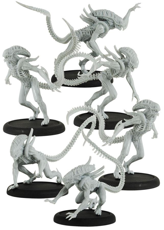 Avp: Alien Warriors Box Front